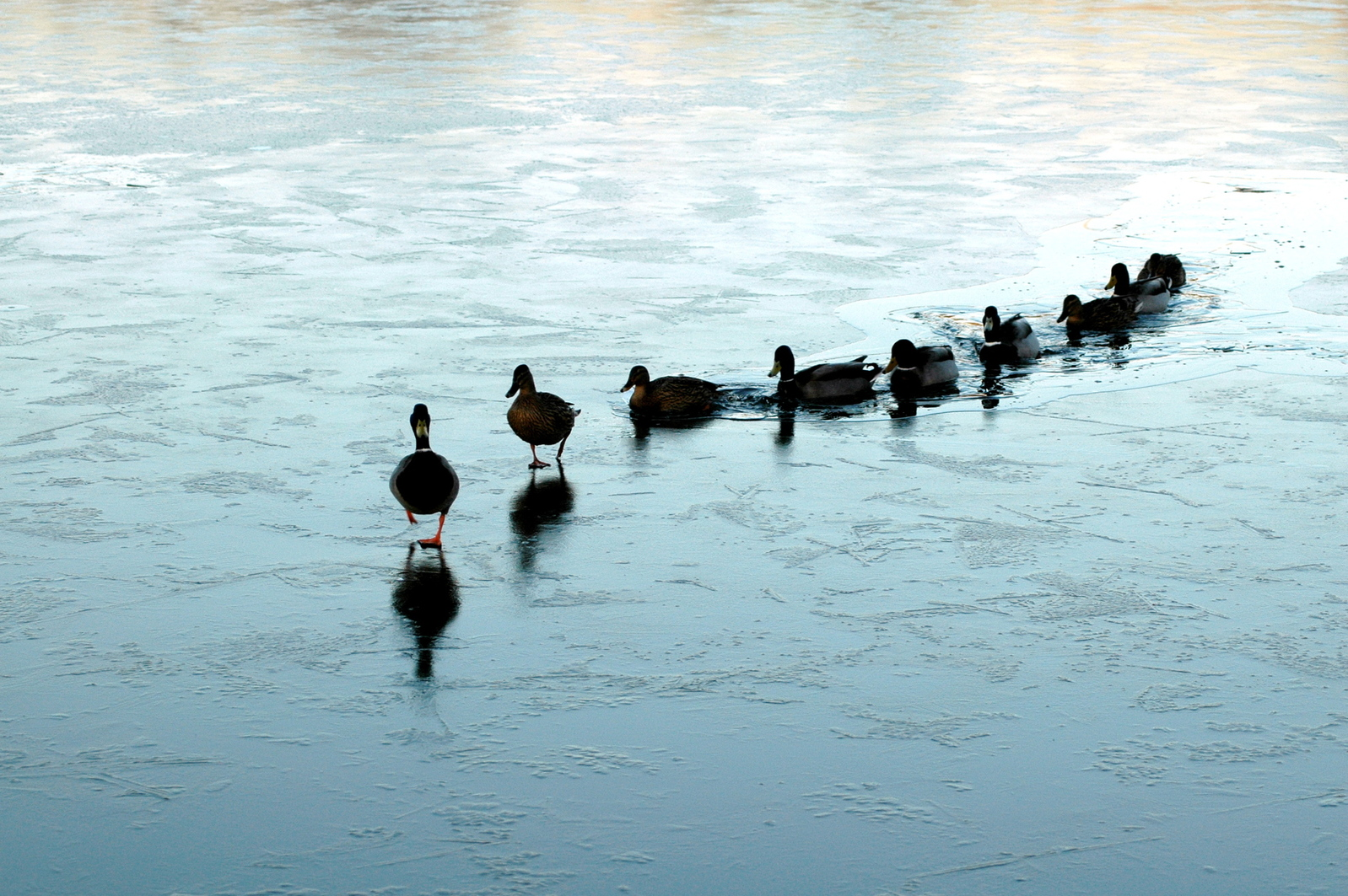 Get Your Ducks In A Row! 7 Things To Remember As You Prepare To Be A Mentor Coach